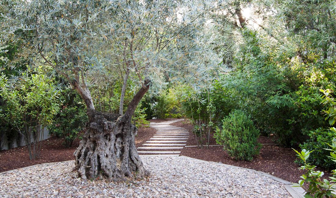 Proyecto de arquitectura paisajismo jardin al norte